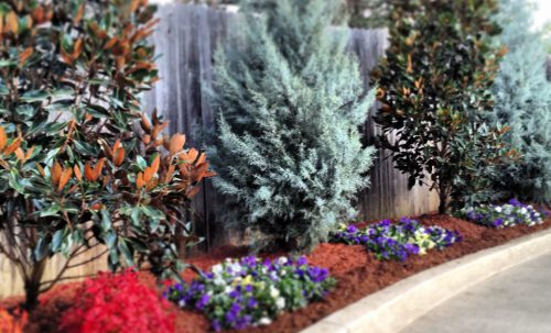 Outdoor Landscape Management