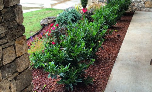 Flower Bed Design Service